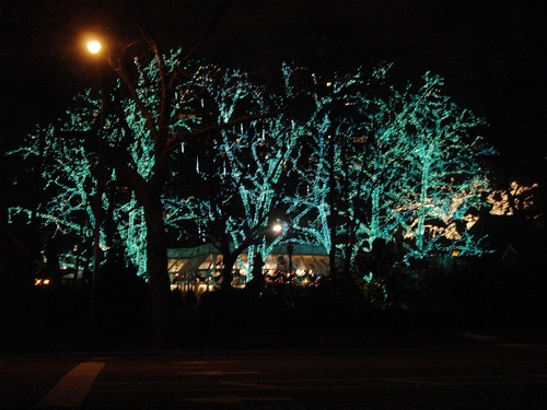 Trees with Christmas lights at Tavern on the Green.